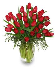 Cherry Red Tulips